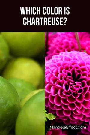 What color is chartreuse?